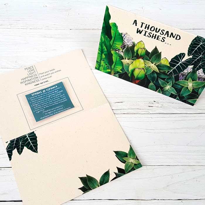 Jardinera Iris / Habibi